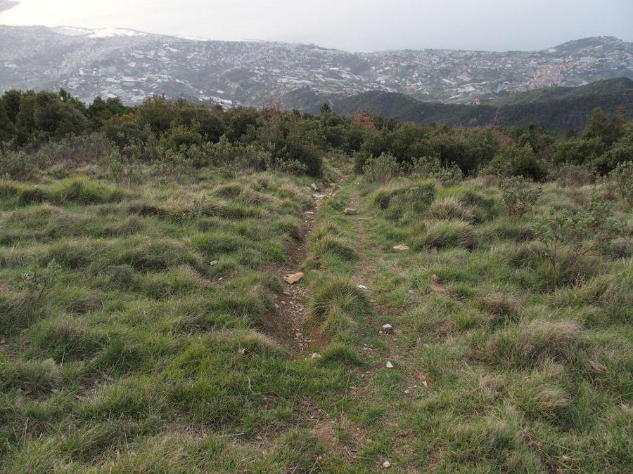 Mt Carparo